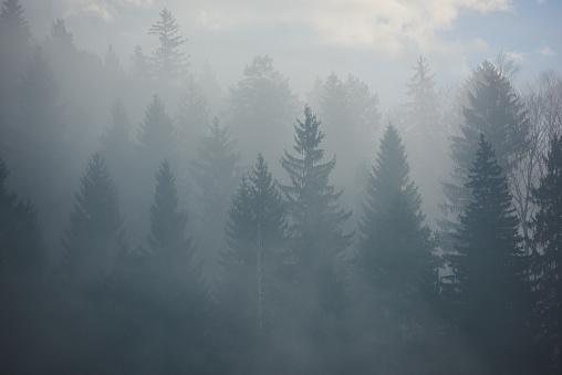 Atmosphere「amazing forest landscape」:スマホ壁紙(18)