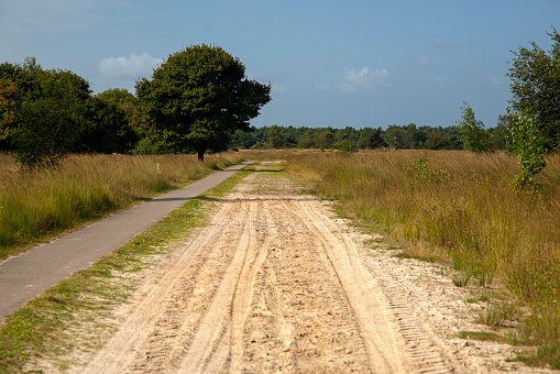 North Brabant「Sandy track and cycling path in Dutch heathland reserve Kampina」:スマホ壁紙(10)