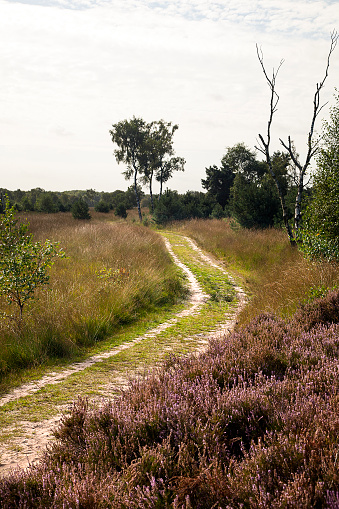 North Brabant「Sandy track in Dutch heathland reserve Kampina」:スマホ壁紙(6)