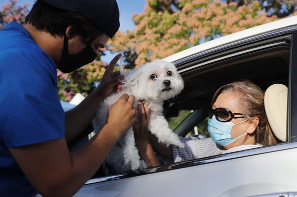 Animal Themes「Drive Through Pet Vaccine Clinic Held Amid COVID-19 Pandemic」:写真・画像(8)[壁紙.com]