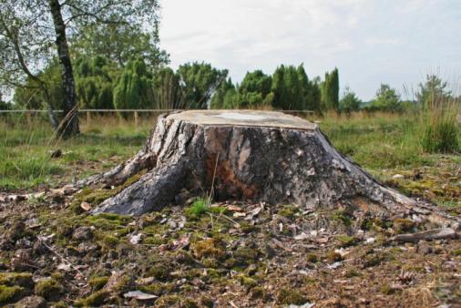背景「tree stump」:スマホ壁紙(11)