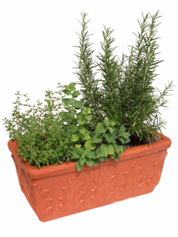 Planting「Pot of Herbs」:スマホ壁紙(16)