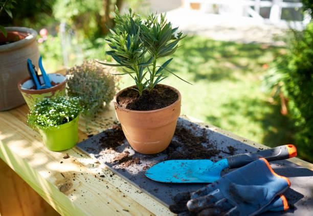 Potted oleander on table in garden:スマホ壁紙(壁紙.com)