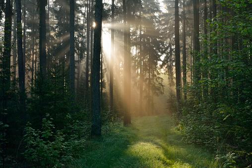 Twilight「Forest with sunbeams and mist. Franconia, Bavaria, Germany.」:スマホ壁紙(16)