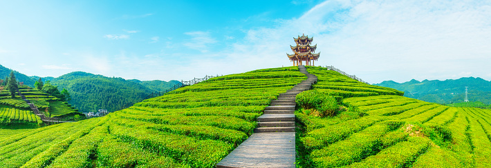 Planting「Tea plantation」:スマホ壁紙(13)