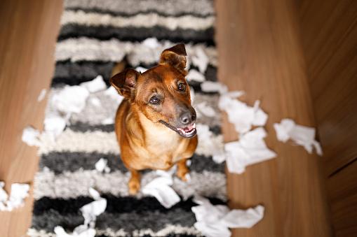 Affectionate「Dog proud of it's mess」:スマホ壁紙(17)
