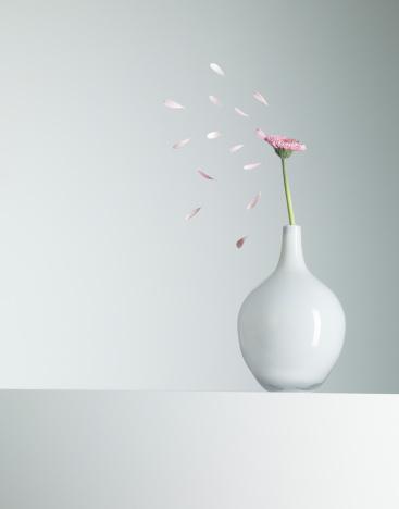 Single Flower「Flower petals flying from pink flower in vase」:スマホ壁紙(18)