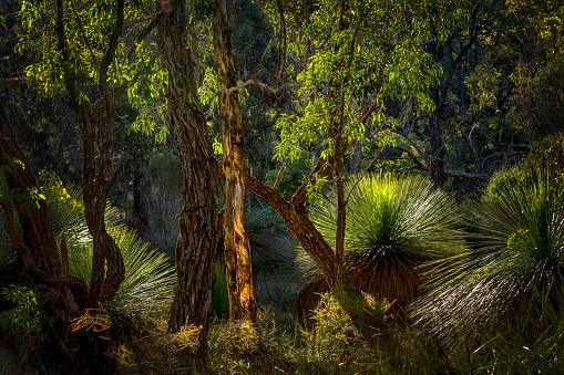 Bush Land「Bushland with grass trees, Perth, Western Australia, Australia」:スマホ壁紙(17)