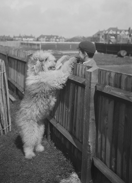 Animal Body Part「English Sheepdog By School Boy」:写真・画像(13)[壁紙.com]