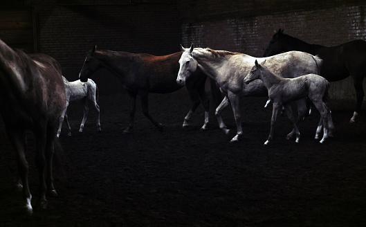 Horse「Horses galloping」:スマホ壁紙(3)