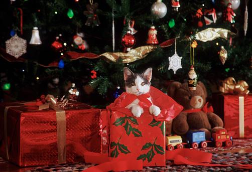 Making A Face「Kitty Christmas」:スマホ壁紙(1)