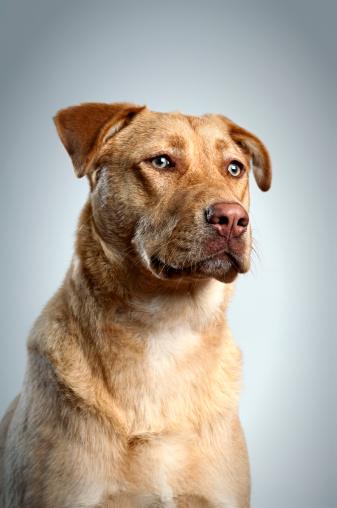 Cool Attitude「Dog Portrait」:スマホ壁紙(7)