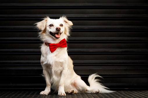 Pet Clothing「Dog portrait with roller shutter door in background」:スマホ壁紙(18)