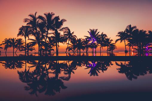 Island「palm tree silhouettes at sunset, africa」:スマホ壁紙(7)