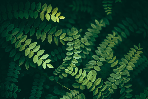 Rainforest「Leaf Background」:スマホ壁紙(18)