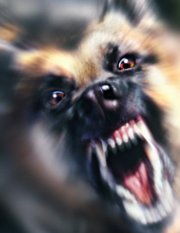 Guard Dog「German shepherd dog snarling, close-up (Digital Enhancement)」:スマホ壁紙(19)