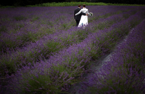 Outdoors「Cheshire Lavender In Bloom」:写真・画像(12)[壁紙.com]
