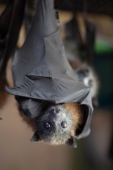 Animal「The Survivors: Saving Australian Wildlife Following Fires And Drought」:写真・画像(8)[壁紙.com]
