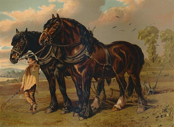 Horse「Clydesdale Stallion & Mare」:写真・画像(19)[壁紙.com]