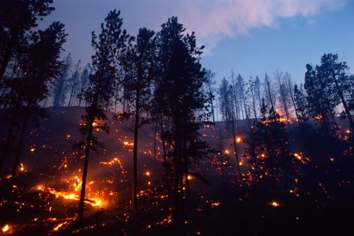 Inferno「Forest fire」:スマホ壁紙(17)
