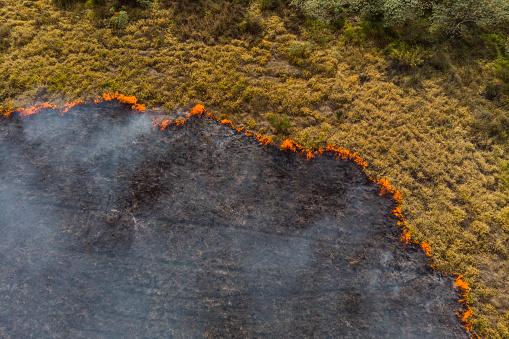 Climate Change「Forest fire in Brazil」:スマホ壁紙(12)