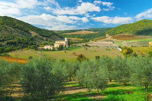 Val d'Orcia「Abbey of Sant'Antimo in Tuscany with olive trees in the foreground」:スマホ壁紙(3)