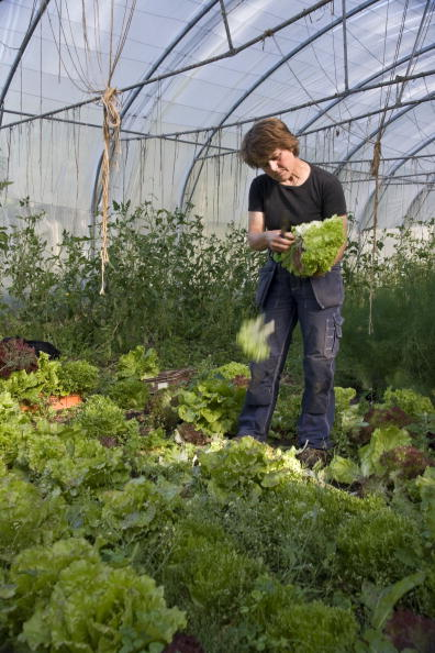 Salad「Namdo Island, Sweden」:写真・画像(1)[壁紙.com]