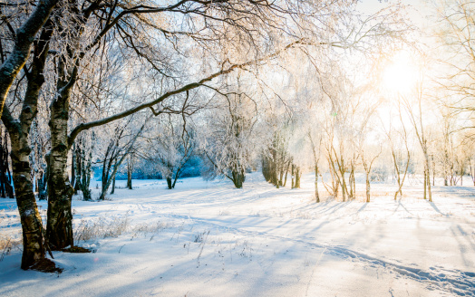 Russia「Bare trees in a forest in sunny winter」:スマホ壁紙(8)