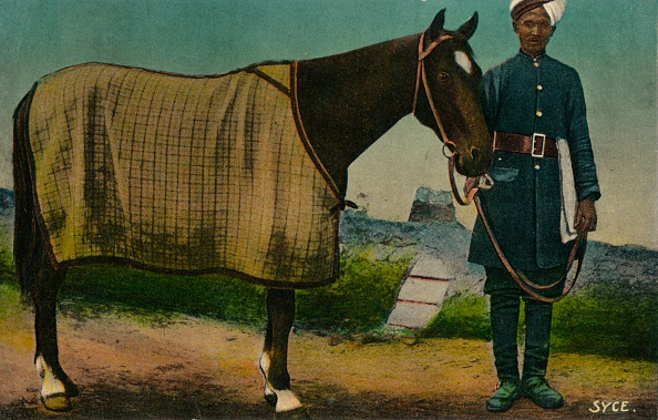 Horse「Syce', c1910」:写真・画像(5)[壁紙.com]