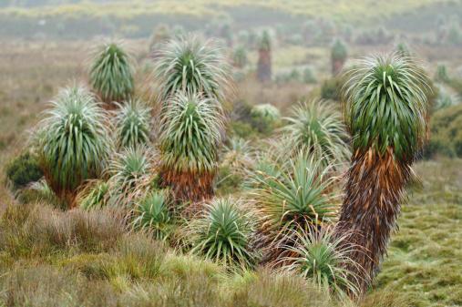 クレイドル山「Pandanis でクレードル山 NP 、タスマニア州、」:スマホ壁紙(16)