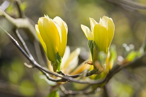 Himalayas「Flowering Garden」:スマホ壁紙(17)
