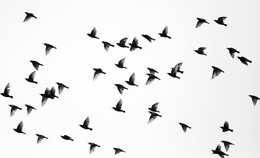 Flock Of Birds「Birds」:スマホ壁紙(2)