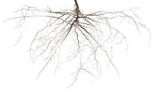 Growth「Root」:スマホ壁紙(14)
