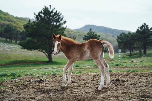 Horse「Horse standing in field」:スマホ壁紙(17)