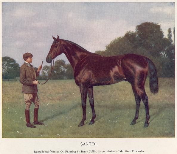 Horse「Santoi」:写真・画像(3)[壁紙.com]