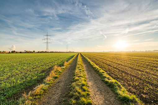 Dirt Road「Path in field at sunrise」:スマホ壁紙(9)