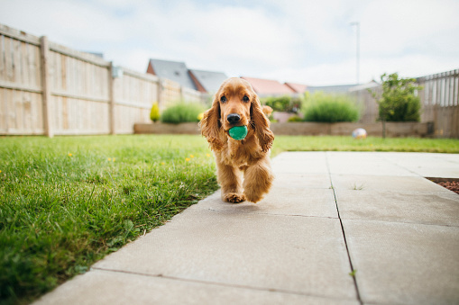 Happiness「Dog Playing Fetch」:スマホ壁紙(15)