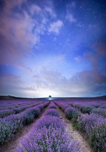 Spirituality「Magical Lavender nights」:スマホ壁紙(11)