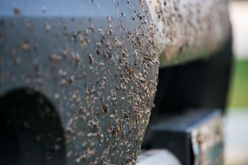 背景「Dead insects on bumper of truck」:スマホ壁紙(4)