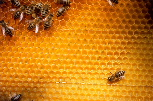 Hexagon「Bees on honeycomb」:スマホ壁紙(6)