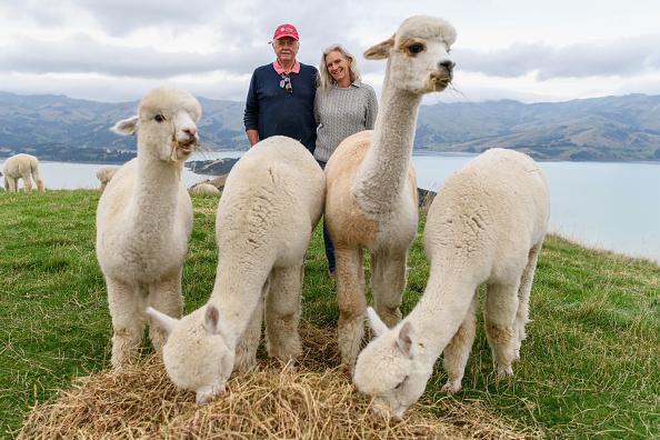 Animal「Akaroa Businesses Prepare For Visitors To Return As Domestic Travel Is Set To Resume Following Coronavirus Lockdown」:写真・画像(0)[壁紙.com]