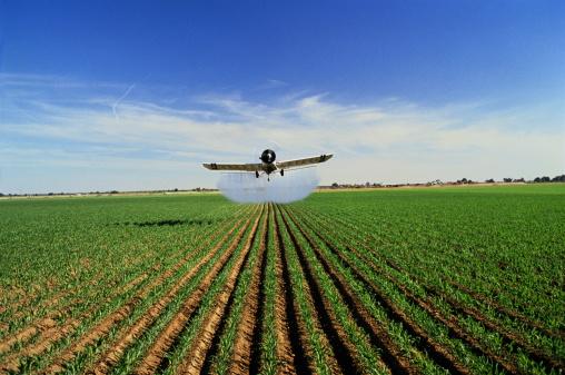 Approaching「Plane spraying pesticide on maize (Zea mays), California, USA」:スマホ壁紙(2)