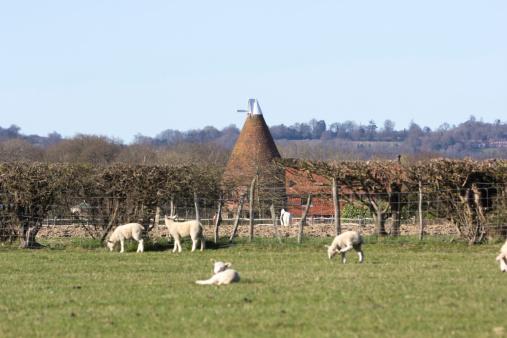 Named Animal「Sheep in Kent, England」:スマホ壁紙(14)