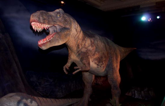Dinosaur「Tyrannosaurus Rex Exhibit」:写真・画像(6)[壁紙.com]