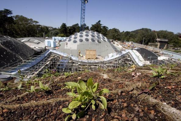 David Paul Morris「California Academy Of Sciences Previews Living Roof」:写真・画像(6)[壁紙.com]