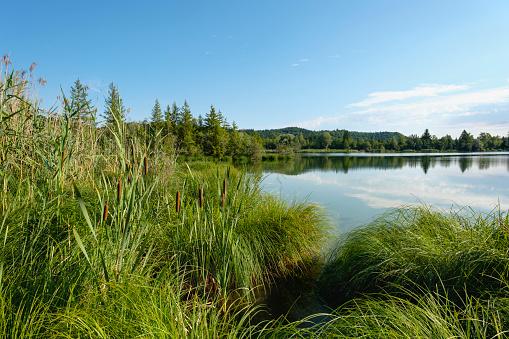Nature Reserve「Germany, Bavaria, Pupplinger Au, Nature Reserve Isarauen, Icking Reservoir」:スマホ壁紙(13)
