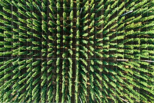 Side By Side「Germany, Bavaria, hop field, aerial view」:スマホ壁紙(19)