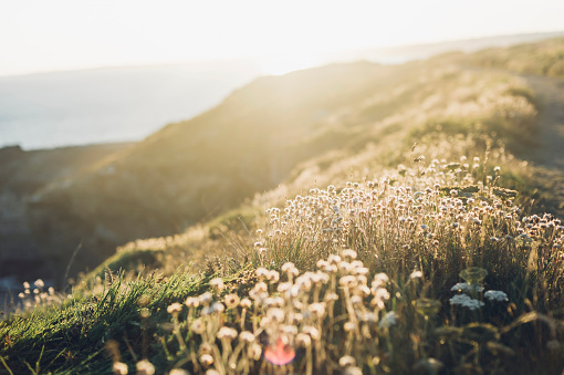 France「France, Brittany, Roscanvel, heather growing at the coast」:スマホ壁紙(7)