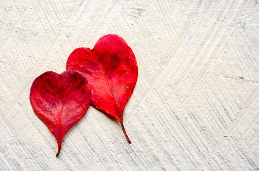 Two Objects「Red heart shaped leaves」:スマホ壁紙(2)