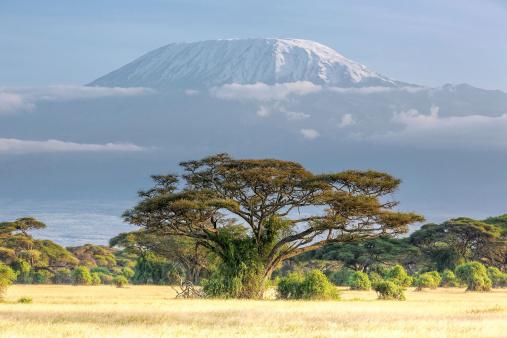 Kenya「Mt Kilimanjaro, clouds and Acacia - in the morning」:スマホ壁紙(11)
